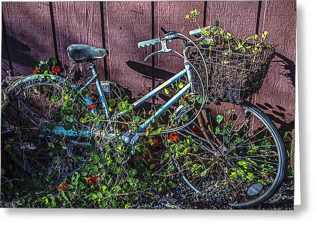 Bike In The Vines Greeting Card