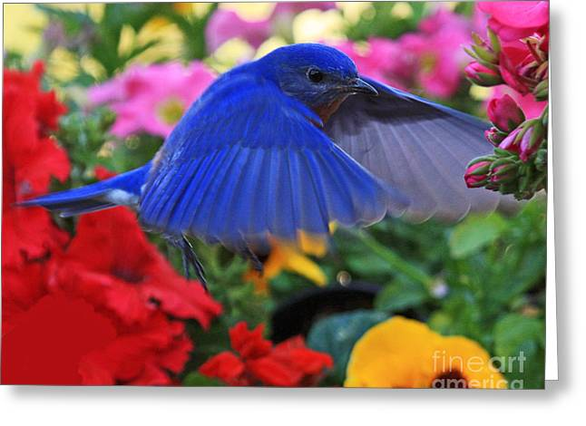 Billy Bluebird Landing Greeting Card