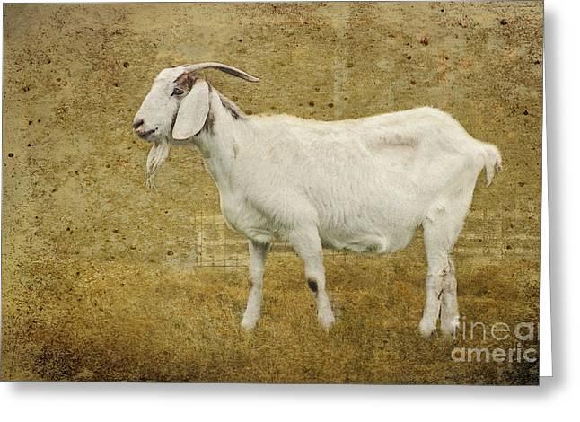 Billy Goat Gruff Greeting Card by Betty LaRue