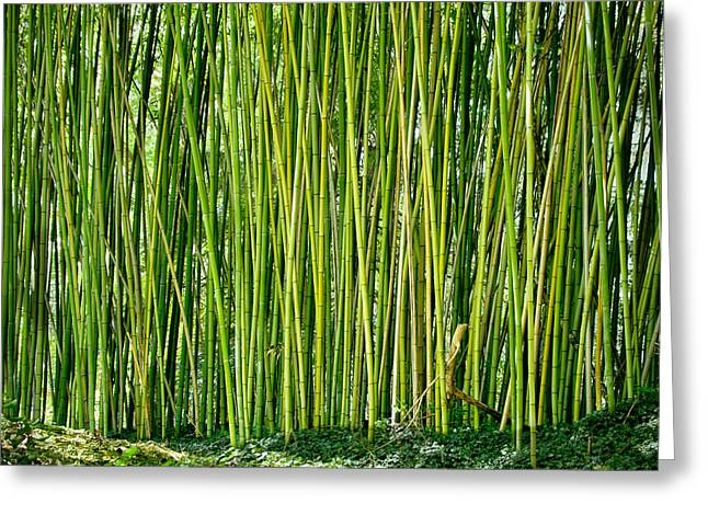 Biltmore Bamboo Greeting Card