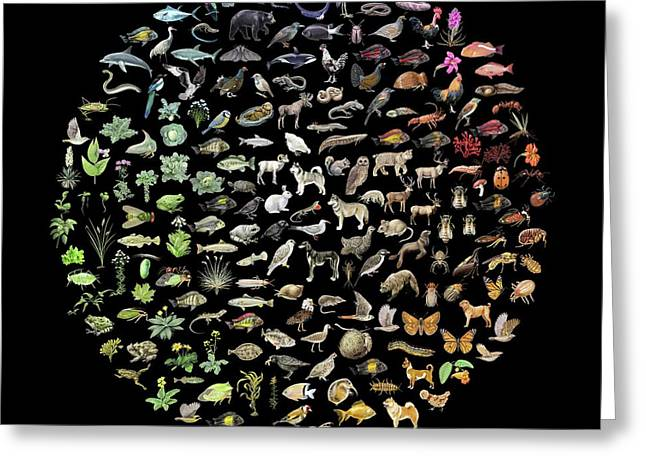 Biodiversity Greeting Card by Nicolle R. Fuller