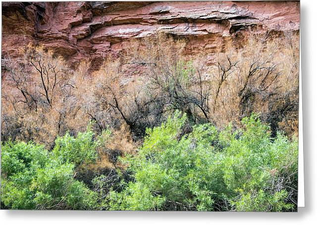 Biological Control Of Tamarisk Greeting Card by Jim West