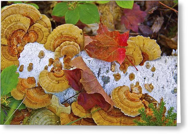 Birch And Fungi Greeting Card
