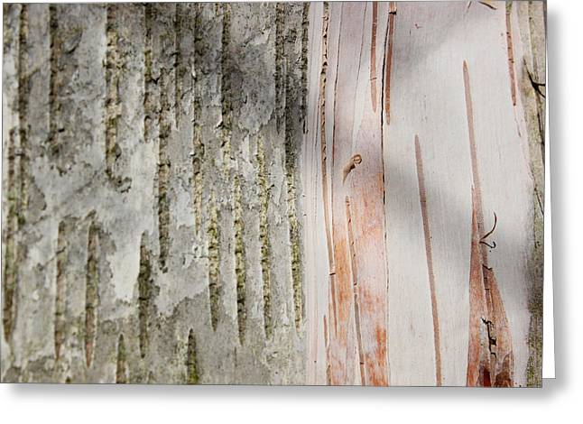 Birch Bark 11 Greeting Card by Mary Bedy