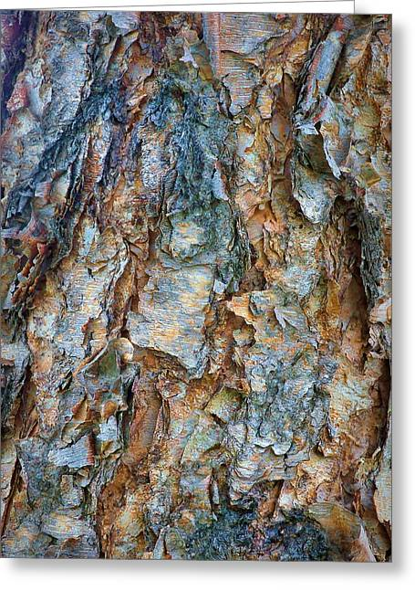 Birch Bark Abstract Greeting Card by Nikolyn McDonald