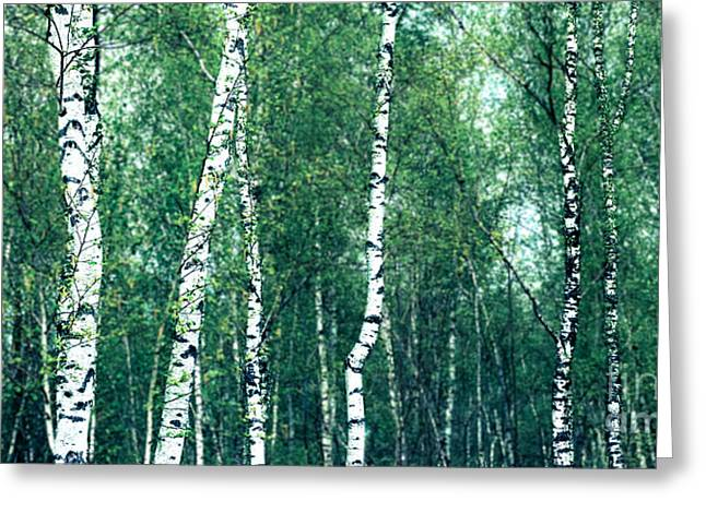 Birch Forest - Green Greeting Card by Hannes Cmarits