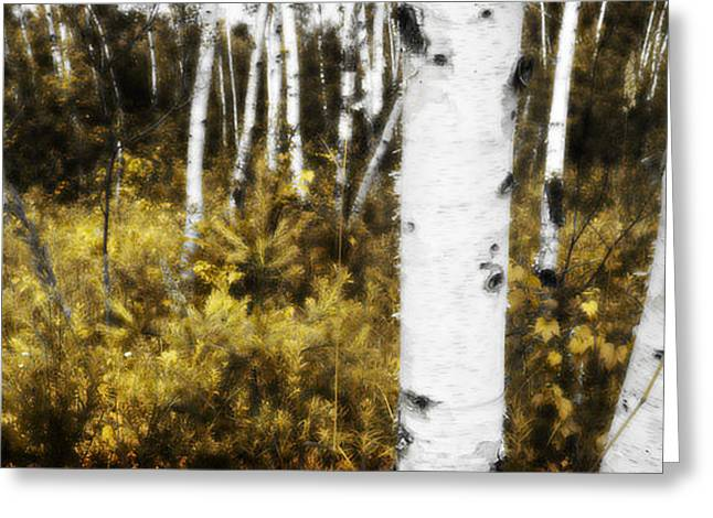 Birch Forest I Greeting Card