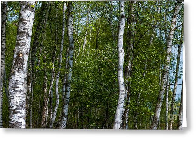 Birch Forest In The Summer Greeting Card by Hannes Cmarits