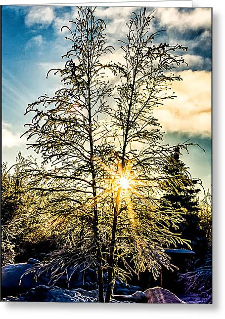 Birch Frost Greeting Card