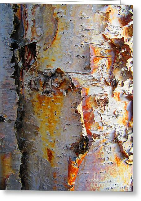 Birch Paper Greeting Card by Heather  Hiland