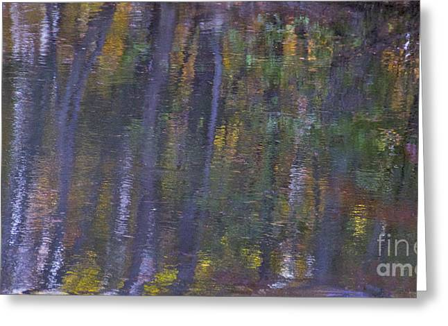 Birch Reflections Greeting Card by Cindy Lee Longhini