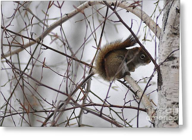 Birch Squirrel Greeting Card by Diane E Berry