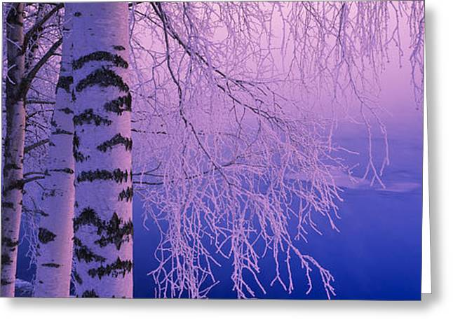 Birch Tree At A Riverside, Vuoksi Greeting Card by Panoramic Images