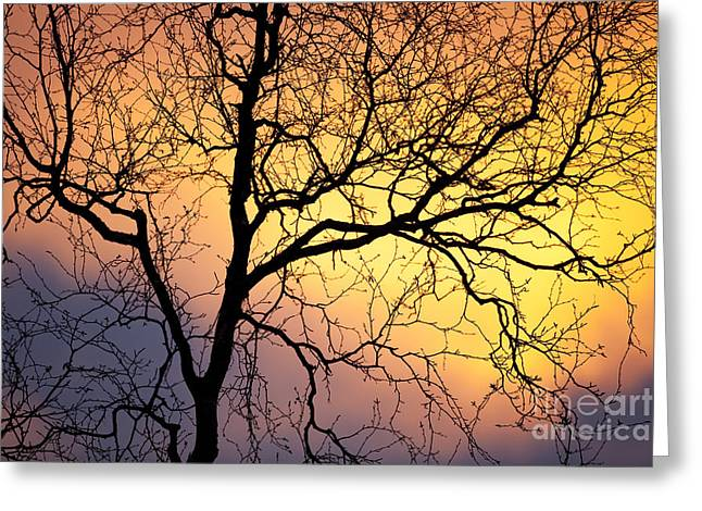 Birch Tree At Sunset Greeting Card
