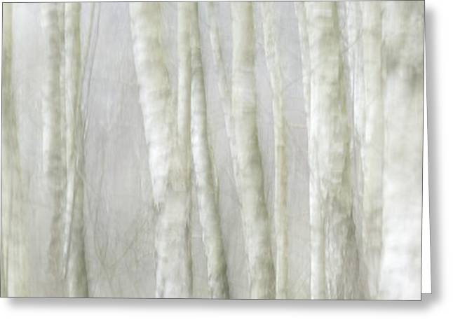 Birch Tree Impression No 1 Greeting Card by Andy-Kim Moeller