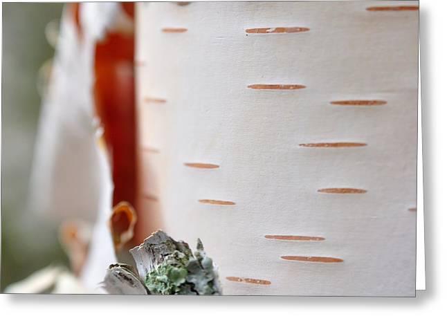 Birch Tree Greeting Card by Todd Soderstrom