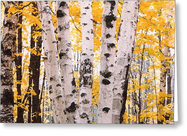 Birch Trees In The Fall Greeting Card by Susan Crossman Buscho
