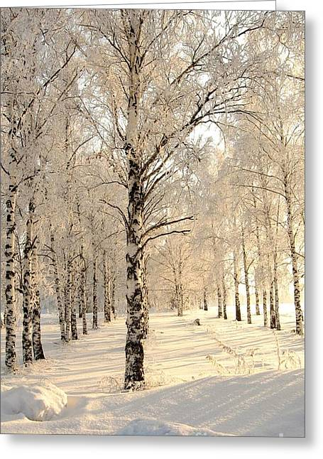 Birch Trees In The Winter Greeting Card by Zina Stromberg