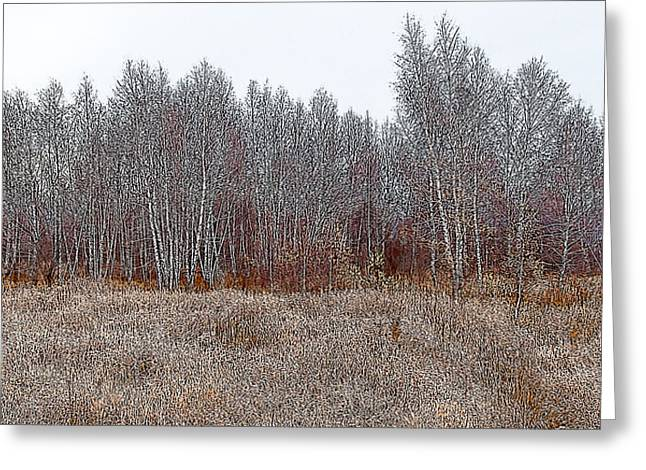 Birch Woods At The Edge Of Town Greeting Card by Rob Huntley