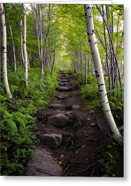 Birch Woods Hike Greeting Card