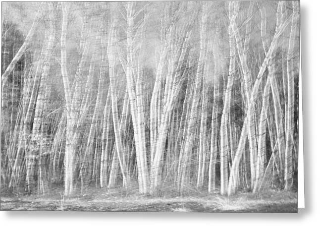 Birches Greeting Card by David Pratt