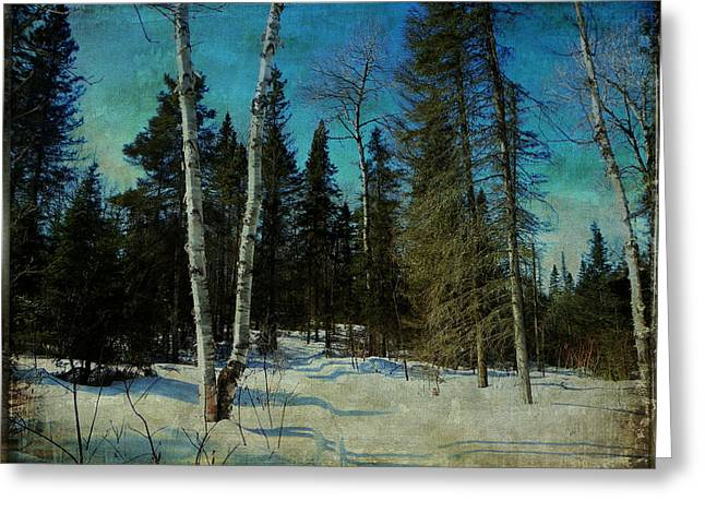 Birches  Greeting Card by Dianne  Lacourciere