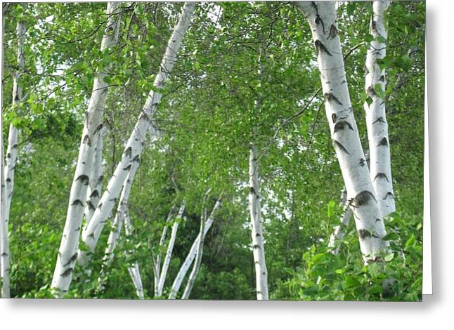 Birches Greeting Card by Patricia E Sundik