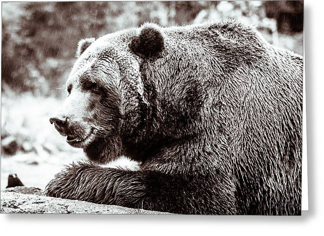 Bird And A Bear In Black And White Greeting Card by Wade Brooks