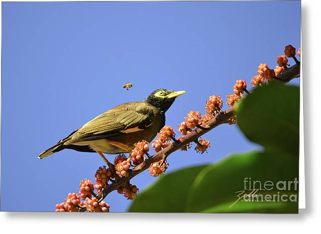 Bird And Bee Greeting Card