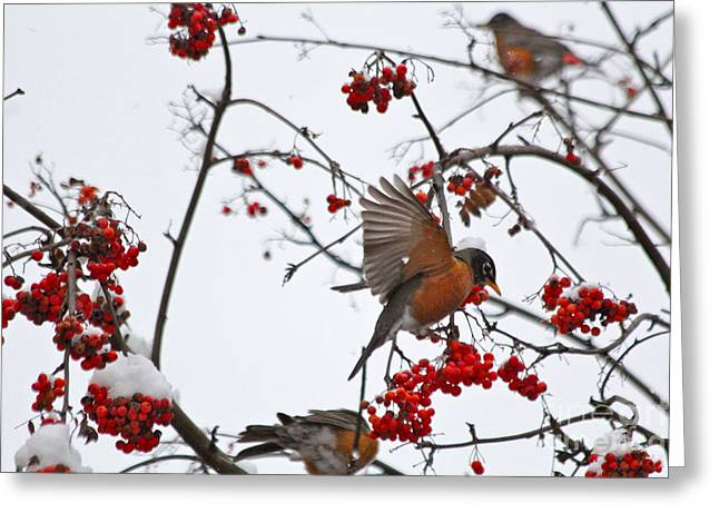Bird And Berries Greeting Card by Jay Nodianos