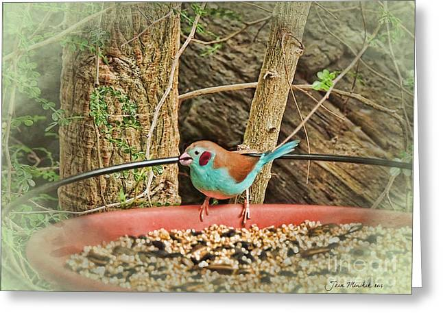 Bird And Feeder Greeting Card