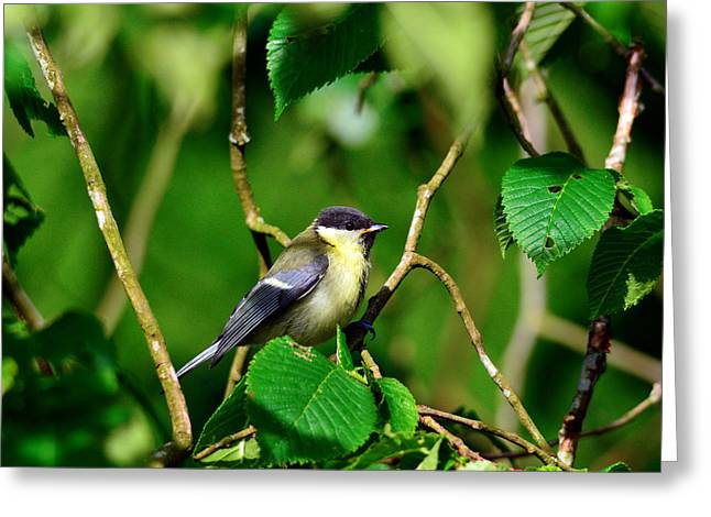 Bird And Foliage Greeting Card by Tommytechno Sweden