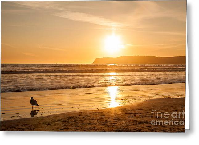 Greeting Card featuring the photograph Bird And His Sunset by John Wadleigh