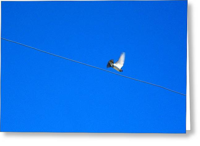 Bird And Wire Greeting Card