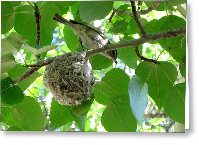 Bird At Home Greeting Card