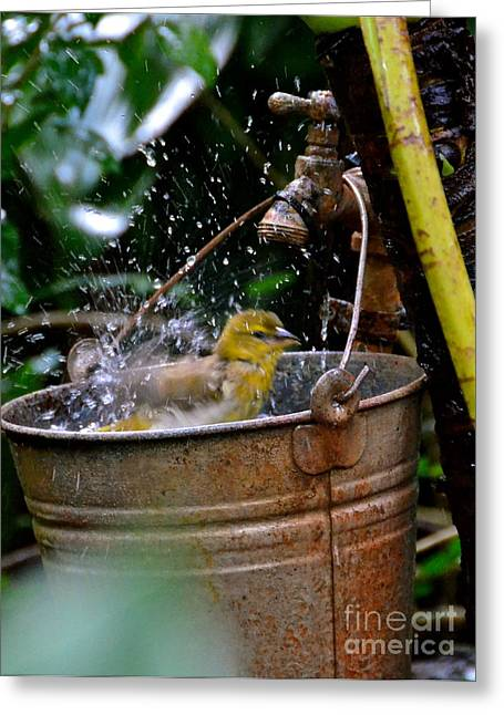 Bird Bath Greeting Card