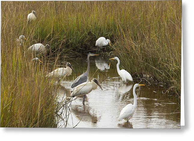 Bird Brunch Greeting Card by Patricia Schaefer