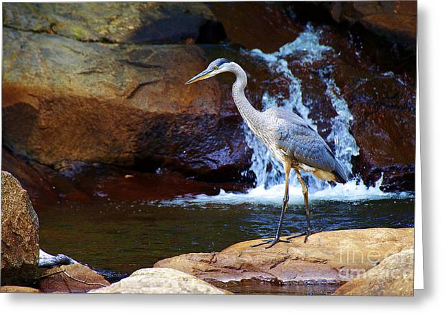Greeting Card featuring the photograph Bird By A Waterfall  by Sarah Mullin