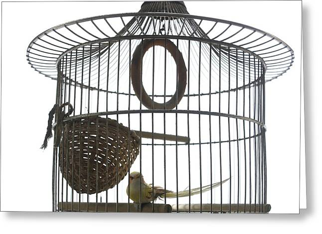 Bird Cage Greeting Card by Bernard Jaubert