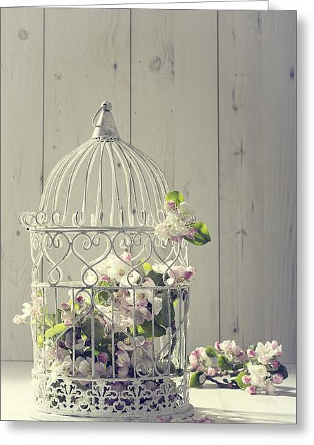 Bird Cage Greeting Card by Amanda Elwell