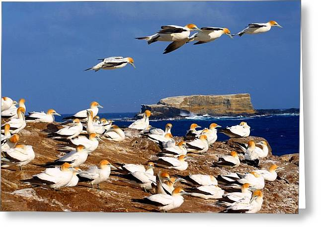 Greeting Card featuring the photograph Bird Colony Australia by Henry Kowalski