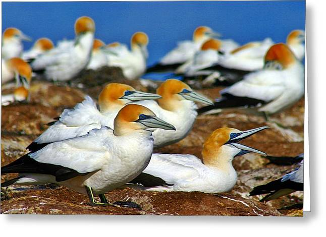 Greeting Card featuring the photograph Bird Colony Australia2 by Henry Kowalski