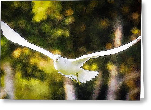 Bird Fly With Colors Greeting Card by Saibal Ghosh