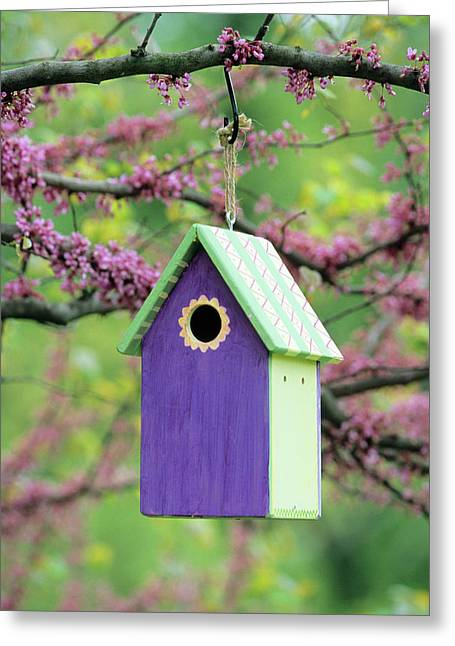 Bird House Nest Box In Eastern Redbud Greeting Card