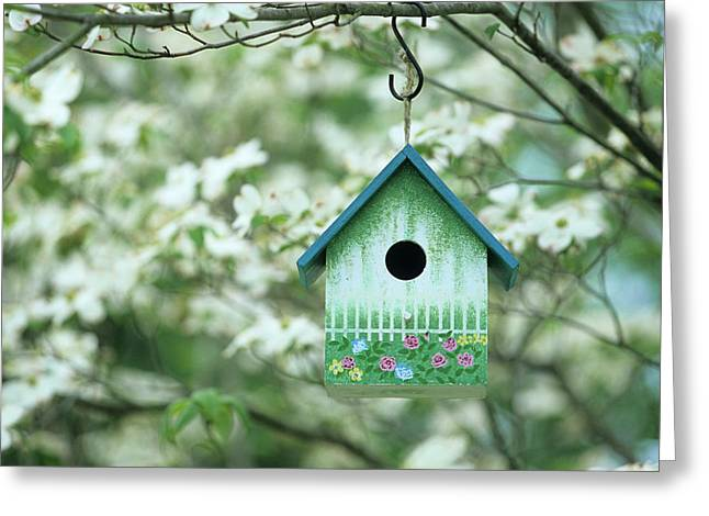 Bird House Nest Box In Flowering Greeting Card