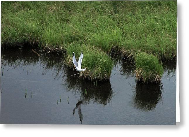 Bird In Flight In Alaska Greeting Card by Ronald Olivier