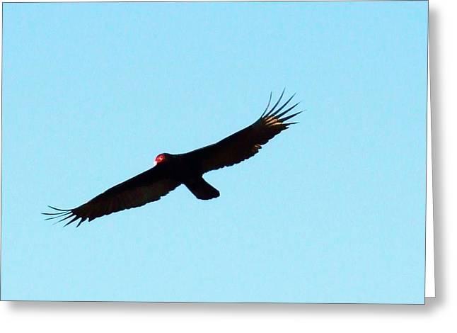 Bird In Flight Greeting Card by Van Ness