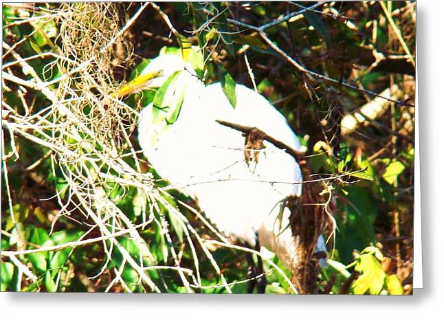 Bird In Mangroves Greeting Card by Van Ness