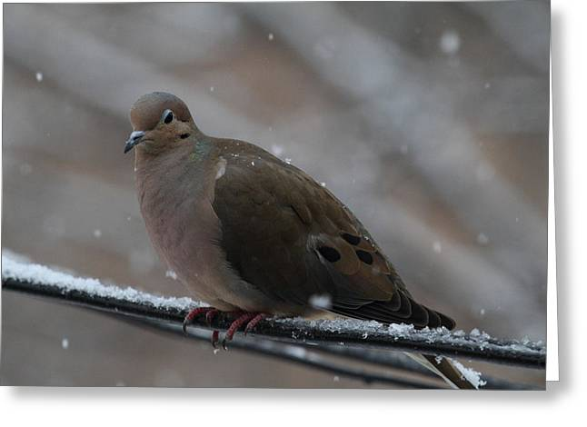 Bird In Snow - Animal - 011311 Greeting Card by DC Photographer