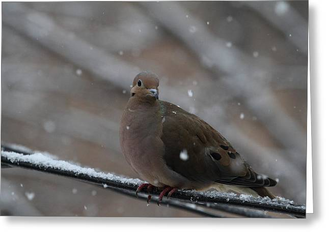 Bird In Snow - Animal - 01137 Greeting Card by DC Photographer